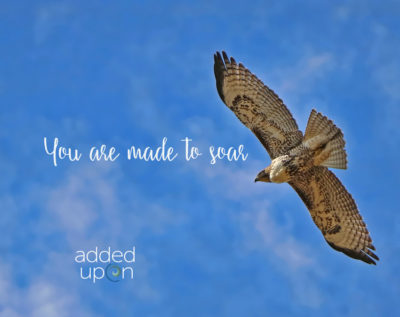 learn to soar upwards